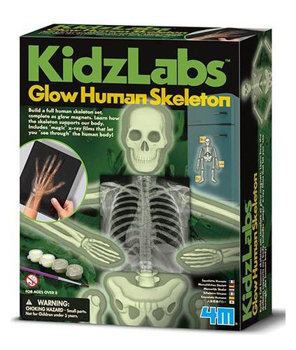 Детская лаборатория 4M Скелет человека (00-03375)